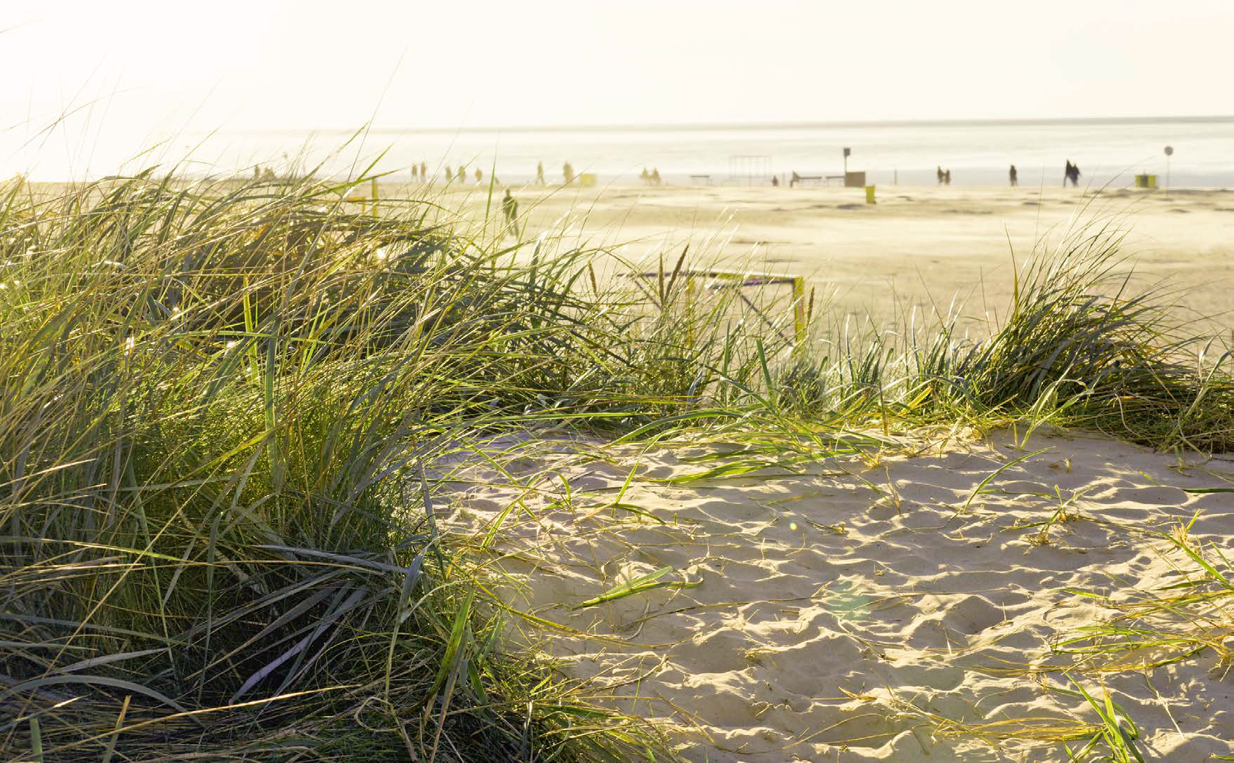 Dünensand mit grünem Dünengras im Hintergrund der Norddeicher Strand mit Blick auf das Wattenmeer