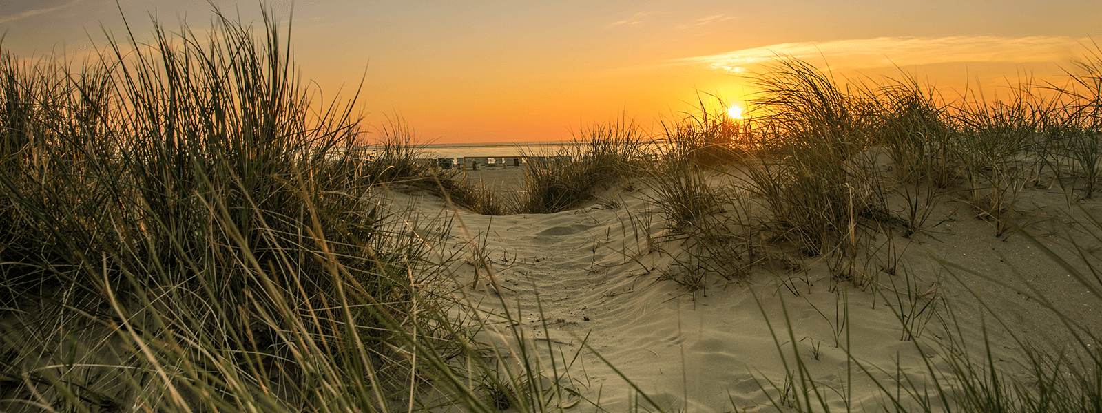 Blick durch Düne mit Dünengras auf den Norddeicher Strand