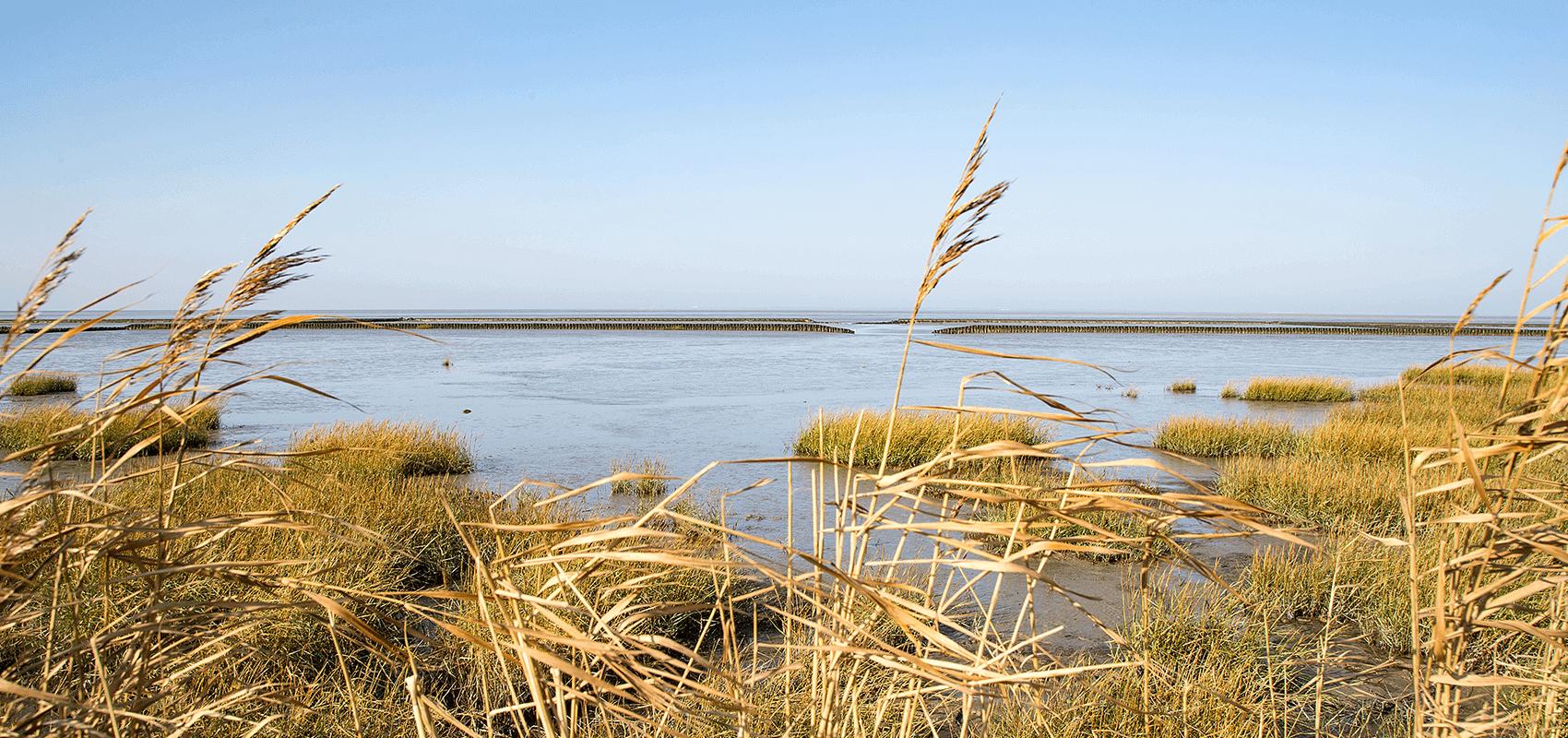 Salzwiesen und Wattenmeer